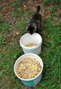 Bodacious Inspecting Feed Buckets