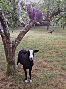 Enjoys Counting Sheep from Atop Trees