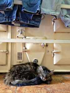 After a Long Day There is Nothing Like Sleeping Under the Laundry in Front of the Aga
