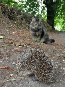 Knows Hedgehogs Need Respect