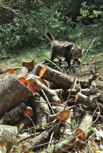 The Inspector Approaches the Wood Pile