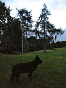 Walking the Fields in the Evening Light