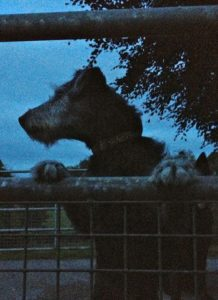 Pepper Hears  as Squirrel in the Last of the Evenin