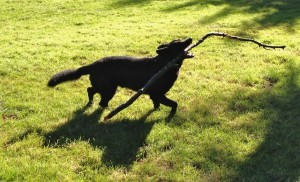 My Stick Come Play With Me