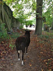 Leading Me Through the Trees