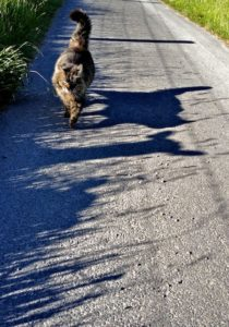 Sheep Shadow Chaser