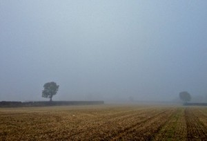 Misty Morning Corn Field Parking