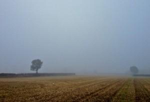Misty Morning Corn Field Parking