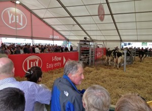 Crowds 5 to 10 Deep Around Auto Milking Demo