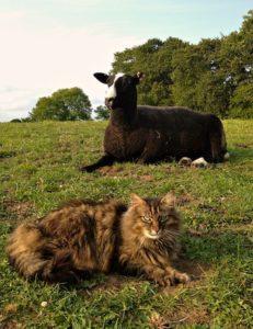 Bodacious The Cat Shepherd