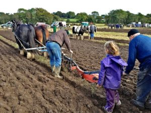 Grandfather & Granddaughter Setting off in the Horse Drawn Ploughing Pairs