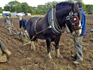 Nearly at the End of a Furrow