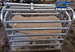 Digital Sheep Scales