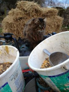 Winter Feeding Expert