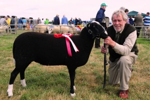 Zwartbles Shearling Ewe Champion at Tinahely Show 2013