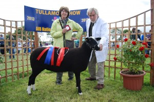 Zwartbles Tullamore Champion 2013