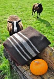 Pippy Showing How the Broad Stripe on this Queen Blanket Represents Her Distinctive Zwartbles Blaze