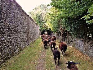 Trotting up the Orchard Lane