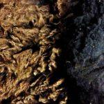 Topside & Bottom-side Zwartbles Fleece