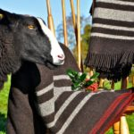 Zwartbles Irish Woollen Throw & Blanket