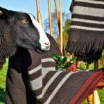 Zwartbles Irish Woollen Throw & Blanket