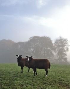 Chilly Misty Morning