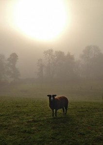 This mornings sun is of a milky hue, thick river mist blocking out its warming light on frosty fields