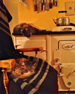 Cats staying warm by the Aga on Zwartbles Irish Woollen Blankets
