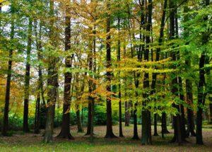 Huntington Castle Autumnal Woodland