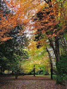 Vibrant woodland color