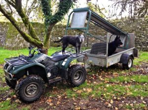 I wish the field hay rack had an axel & wheels an awkward beast to load. 2 assistants only there for the ride
