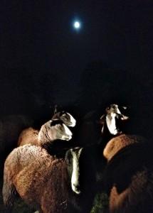 Moon light Quad light in the night