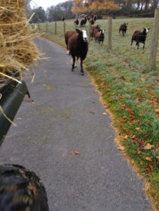 I Ride the Quad Shaking a Bucket & They Gallop After Me