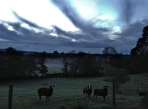 This morning's first light just after the crow crowed sky rush hour cacophony with strange mares tails clouds