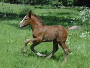 Mystic loved to gallop