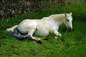 Silver takes a breather munching some grass while the foals back legs are still inside.