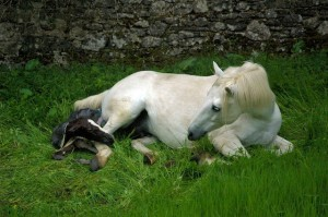 The Foal & Mare get a first good look at each other & Mystic makes her first mumbling nickering sound