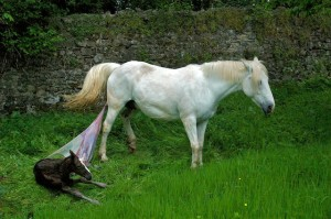 Slowly gently she steps sideways breaking her last physical attachment to her foal