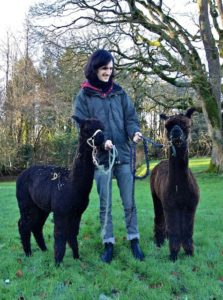 Piers the Leading Alpaca