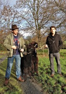 Visiting Americans, Koji & Matan Who Never Thought They Would be Training Alpaca