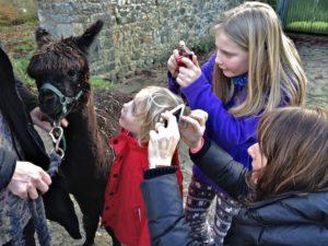 Fascinated by Huge Alpaca Eyes & Long Lashes
