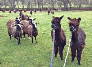 """""""Crumbs I think they are now following us!!!! We better get out of here!!!"""""""