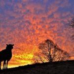 Dawns flaming mackerel skies: Red Sky in Morning Shepherds Take Warning