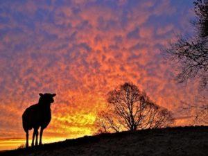Red Sky in Morning Shepherds Take Warning