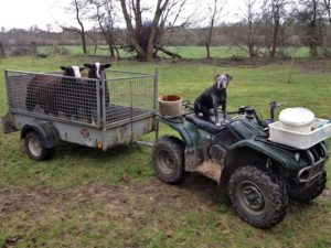 Rams loaded up in the field & ready to go