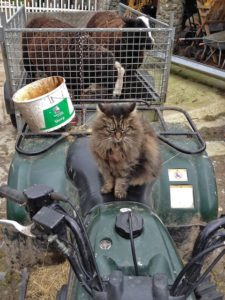 """""""Don't Forget About the Rams"""" the Cat Shepherd's Instructions"""