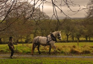 We even did test driving for tree work, but Mystic likes moving forward & you need a horse who stands stone still for tree work