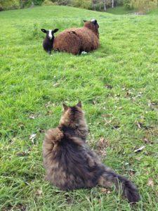 The lamb is still a bit worried. Note it's alert ears & direct gaze