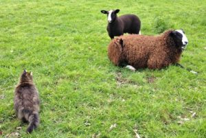 Then he looks at the lamb walking right past him as close as a humans arms length