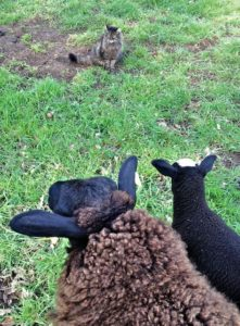 Aggee & Smudge approach Bodacious